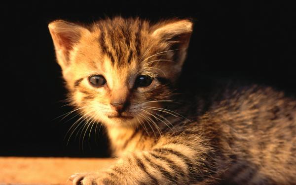 为什么小猫睡觉抽搐