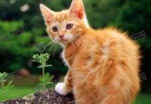 如何让猫咪互相适应?